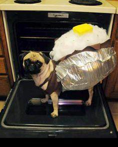 7ce77bcd5fb9dfdfb365c6e3aa5019e2--baked-potatoes-pet-costumes